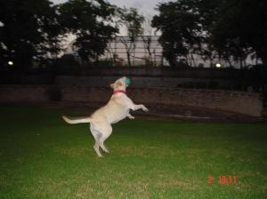 ליידי משחקת בכדור עם ילדים