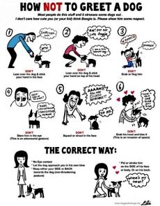 איך ל - א ניגשים לכלב